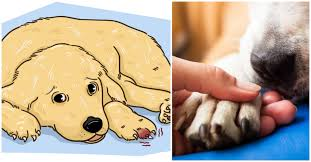 puppy broken nail what to do if your