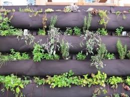 Information About Diy Herb Walls Tips On Making Vertical Herb Garden Planters