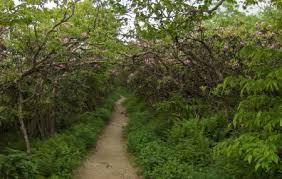 craggy gardens asheville ticket