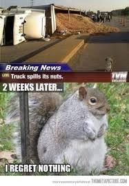 30 Pictures Of Squirrels Ideas Squirrel Cute Animals Animal Pictures
