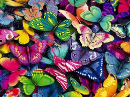 اجمل خلفيات الفراشات افضل البوستات والخلفيات للحيوانات الطائره