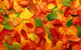 awesome natural autumn leaves wallpaper