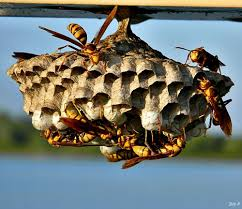 10 wasp myths that will surprise you