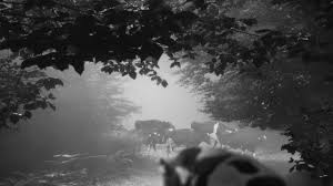 Frames of Mind: Nine Reflections on the Passing of Filmmaker Abbas  Kiarostami - Image Journal