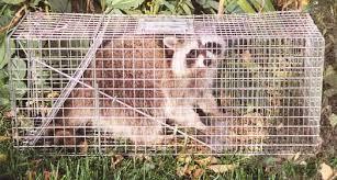 Animal Repellents Live Traps Gempler S