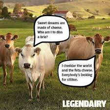 Sweet Dreams Are Made Of Cheese Funny Pictures Cow Puns Cows Funny