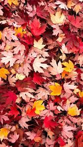 fall leaves iphone wallpaper