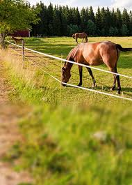 Fence For Horse Electric Fence For Horses Horse Fence Paddock