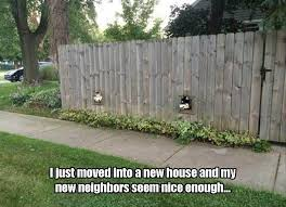 Funny Pictures Of The Day 37 Pics Funny Dogs Dog Fence Animal Memes