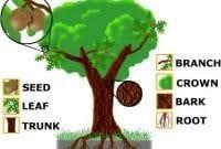macam macam part of tree dalam bahasa inggris beserta artinya