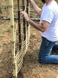 Diy Bamboo Screening Bamboo Screening Fence Bamboo Diy Bamboo Decor