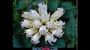 صور زهور جميلة ومدهشة واخرى غريبة Youtube
