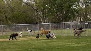 Petition Build More Fenced In Dog Parks Within The Illawarra Change Org