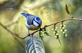 صور طيور عصافير الجنة روعة سبحان الخالق