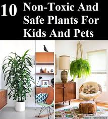 10 non toxic and safe plants for kids