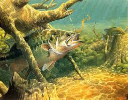 free fish r b fishing
