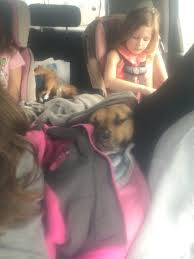 """Adele Brooks on Twitter: """"Heading home@for Easter, Buddy has the best seat  in the car 😬🐕… """""""