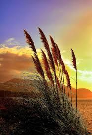 159 Best Seashore images | Scenery, Beautiful places, Nature