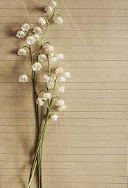 gambar gratis di pixabay bunga bakung lembah model tahun di