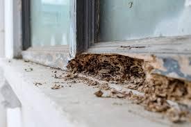 34+ Termite Colony In House Pics