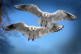 10 صور طيور تحلق في السماء رائعة جدا