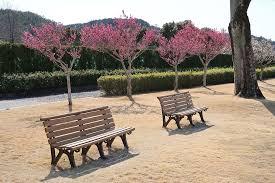 garden park outdoors flowers seat