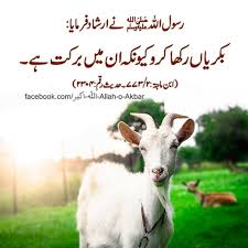 Pin By Anees Raj Anees Raj On Ayanch Ayan A Goats Sheep Farm Goat Fence