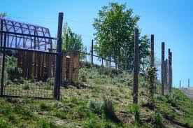 Building A Chicken Run And Why I Hate Free Range Chickens The Elliott Homestead