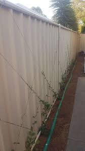 Climbers To Dress Up Colorbond Fence Bunnings Workshop Community