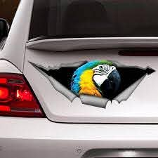 Pin On Parrots
