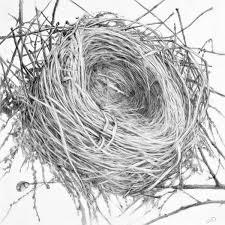 Drawing Empty Nest 2 Original Art By Patricia Dorr Parker