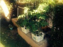 grow your own what fits you best