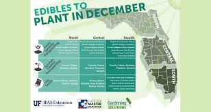 what to plant in december in florida