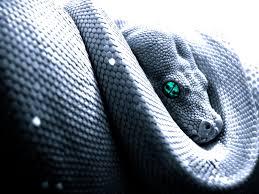 snake cobra wallpaper wildlife