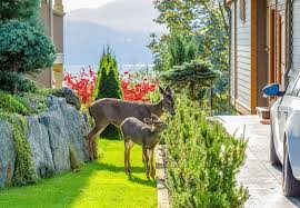 how to keep deer out of a garden bob vila