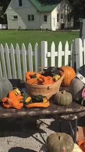 Pumpkins Galore From Our Neighbors Down Picket Fence Creamery
