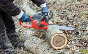 All Seasons Tree Service LLC | Tree Service Cleveland OH