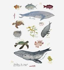 Sea Animals Pack Wall Sticker Decal Australian Animal Etsy