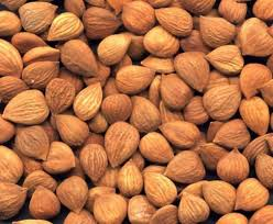 apricot kernel nutrition facts
