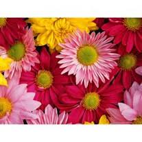 Myrtle Williams Obituary - Visitation & Funeral Information