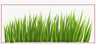 Stunning Fence With Grass And Flowers Png Clipar Image Grass Clipart Free Transparent Png Download Pngkey