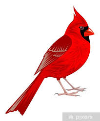 Northern Cardinal Wall Mural Pixers We Live To Change