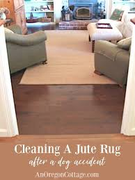 cleaning a jute rug after a dog