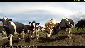Con Bò Sữa ♫ Nhạc Thiếu Nhi Vui Nhộn Dành Cho Bé - YouTube
