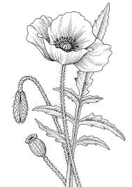 Poppy Line Drawing More Pins Like This One At Fosterginger