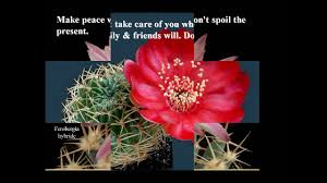 cacti official s photos and cute quotes