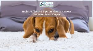 tips on how to remove pet odor from carpet