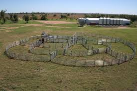 Cattle Fence Outdoor Farm Safety Ideas