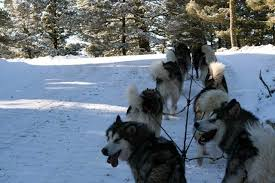Quinault Alaskan Malamutes - Run For The Red Lantern - About Us