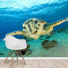 hawksbill sea turtle wallpaper